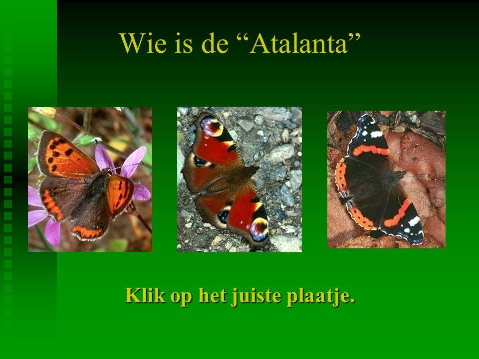 Wie is de Atalanta Klik op het juiste plaatje.