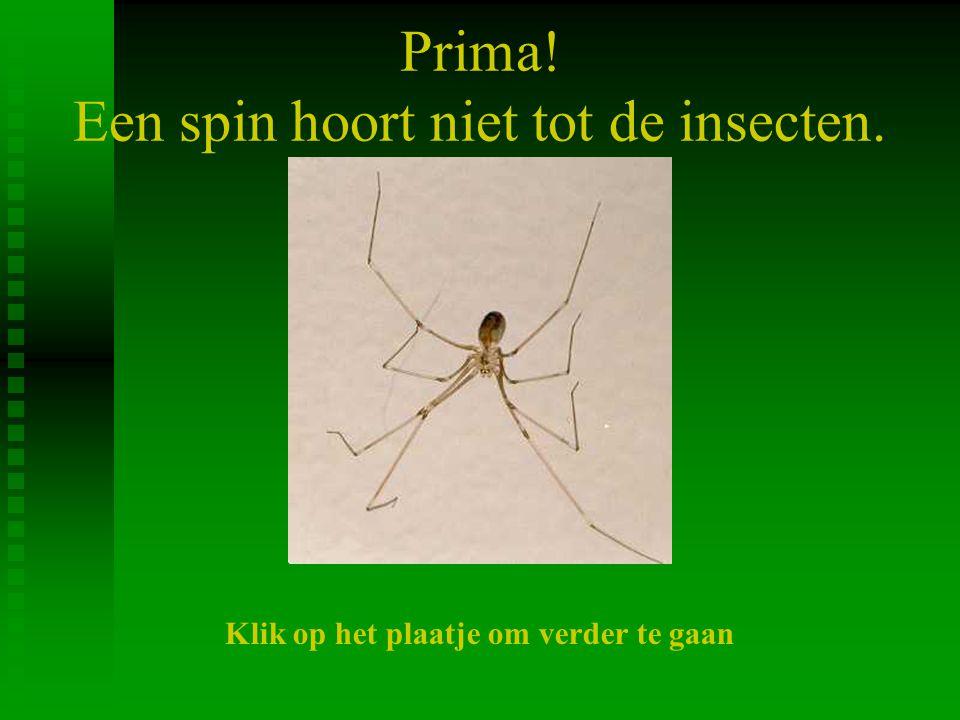 Prima! Een spin hoort niet tot de insecten.