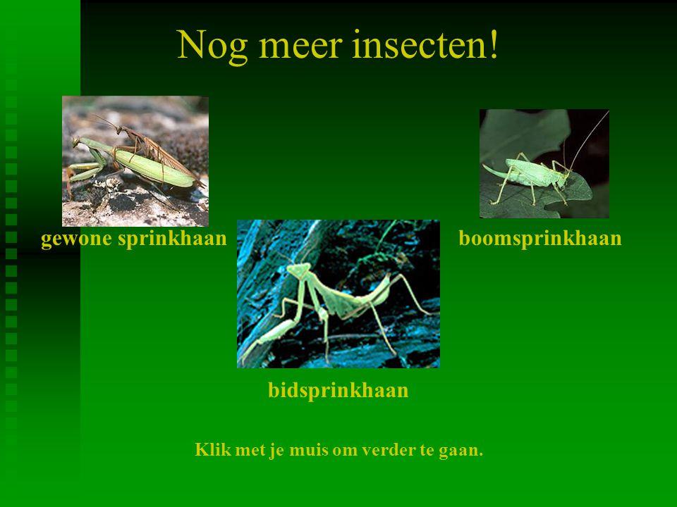 Nog meer insecten! gewone sprinkhaan boomsprinkhaan bidsprinkhaan