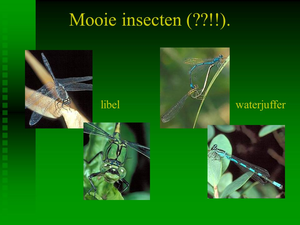 Mooie insecten ( !!). libel waterjuffer