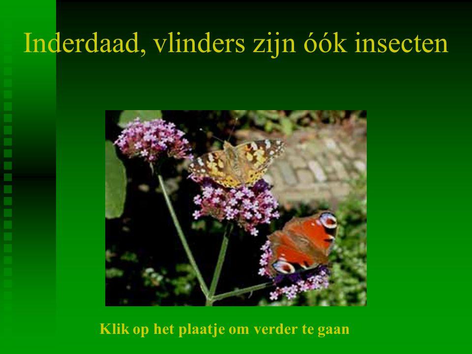 Inderdaad, vlinders zijn óók insecten