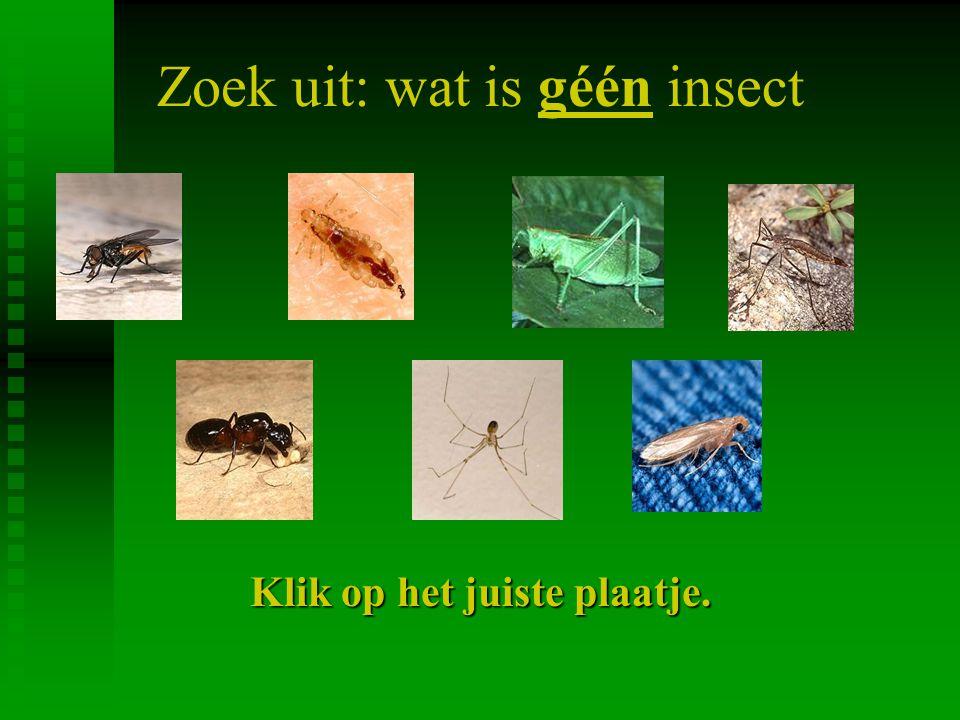 Zoek uit: wat is géén insect