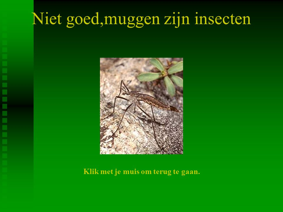 Niet goed,muggen zijn insecten