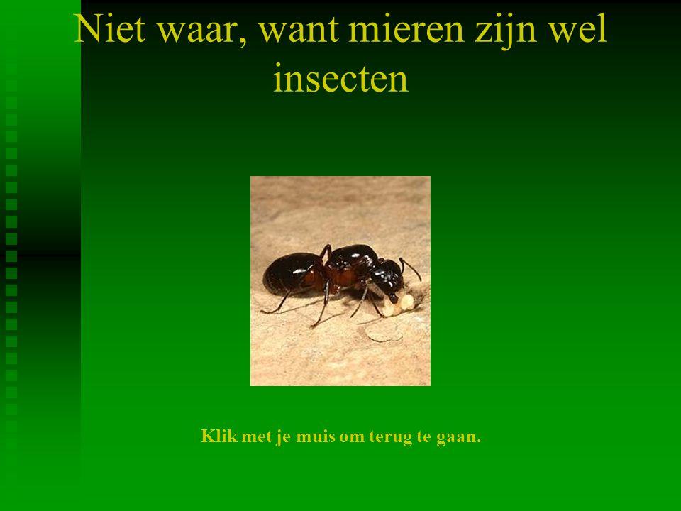 Niet waar, want mieren zijn wel insecten