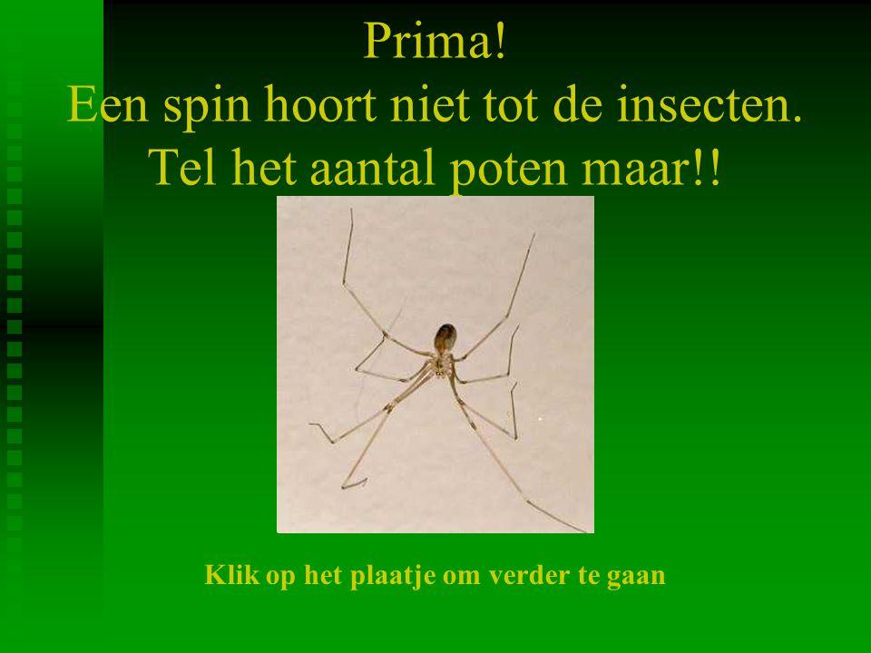 Prima! Een spin hoort niet tot de insecten. Tel het aantal poten maar!!