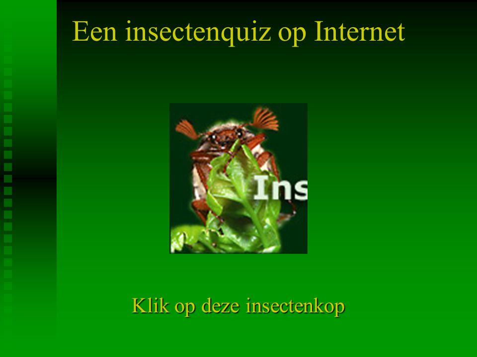 Een insectenquiz op Internet