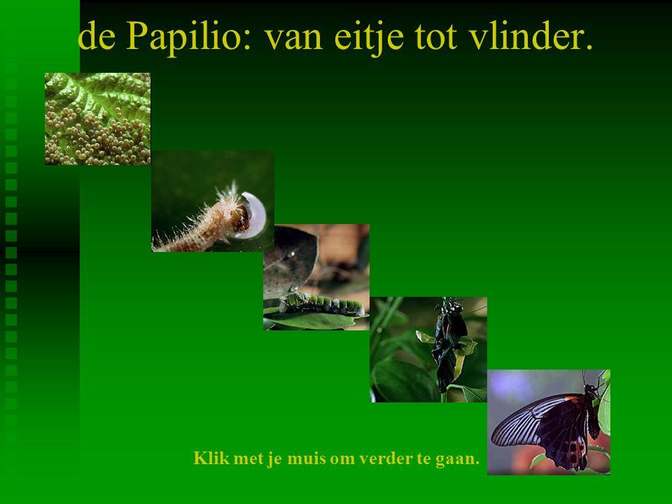 de Papilio: van eitje tot vlinder.