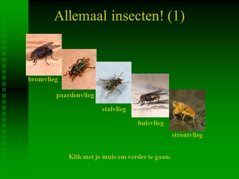 Allemaal insecten! (1) bromvlieg paardenvlieg stalvlieg huisvlieg