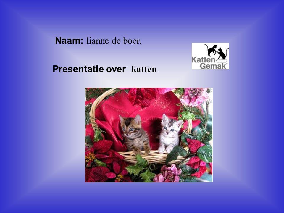 Presentatie over katten