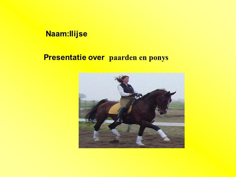 Presentatie over paarden en ponys