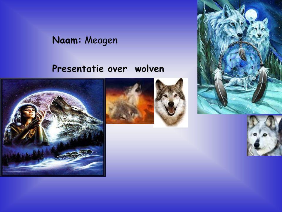 Presentatie over wolven