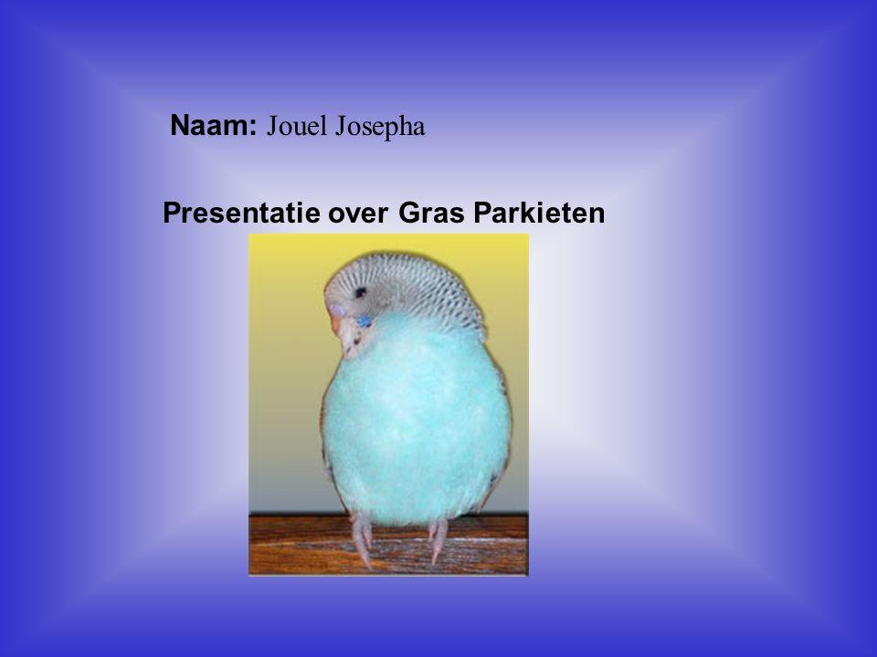 Presentatie over Gras Parkieten