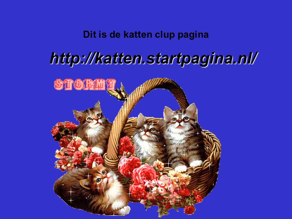 Dit is de katten clup pagina