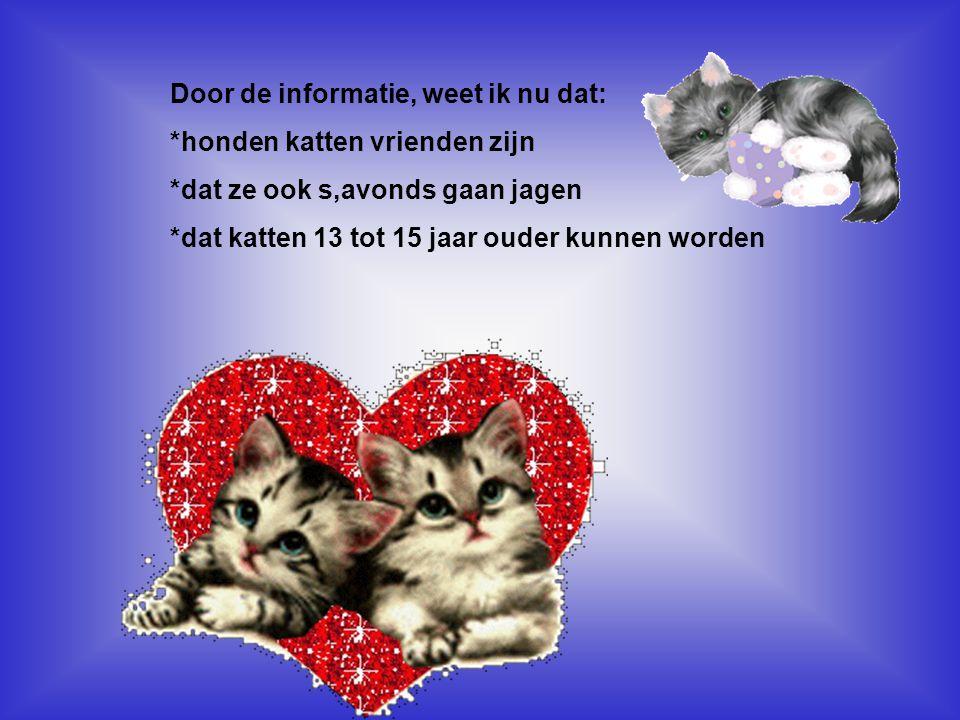 Door de informatie, weet ik nu dat: *honden katten vrienden zijn