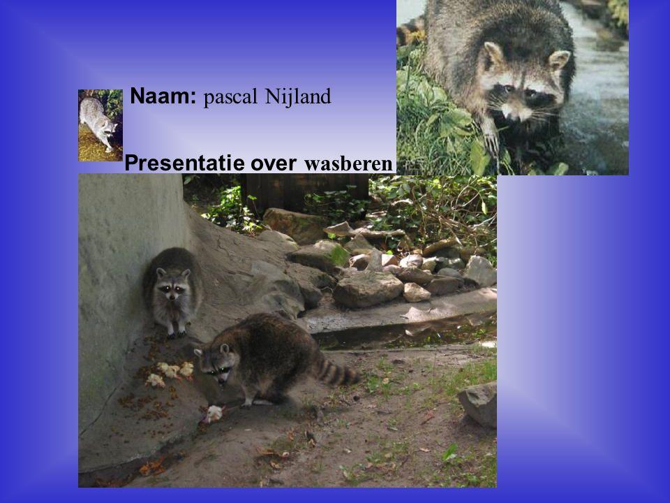 Presentatie over wasberen