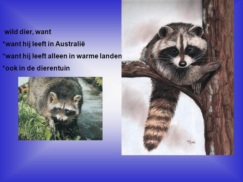 *want hij leeft in Australië *want hij leeft alleen in warme landen