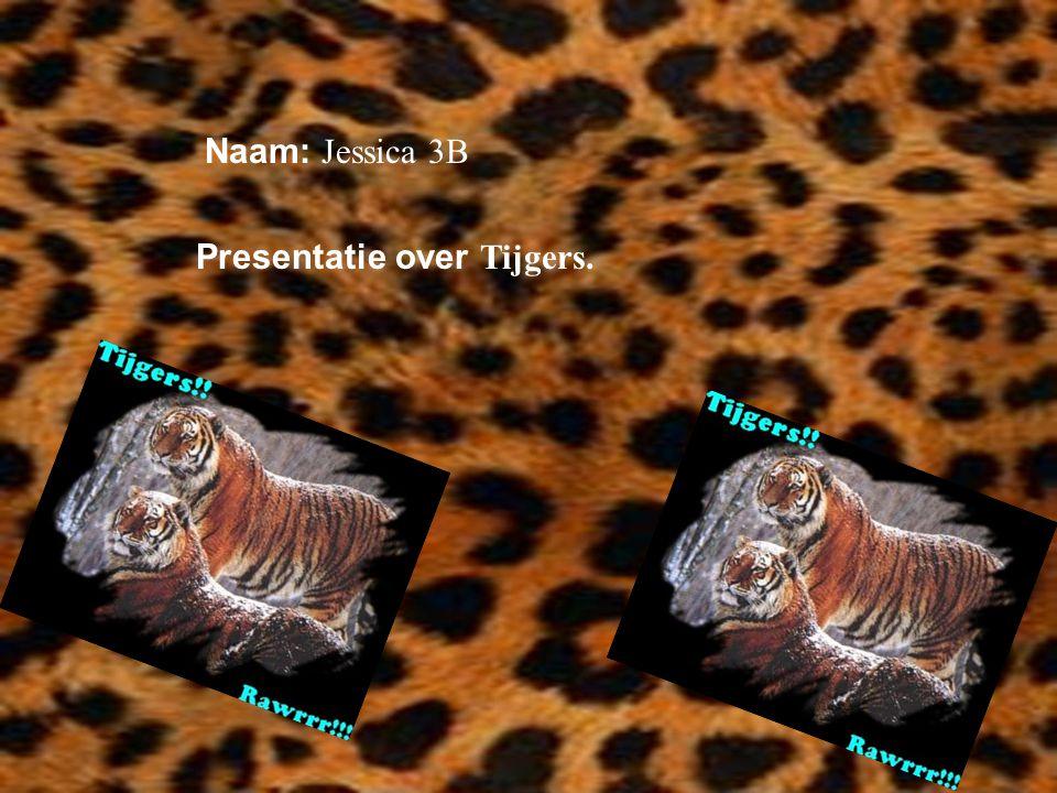 Presentatie over Tijgers.