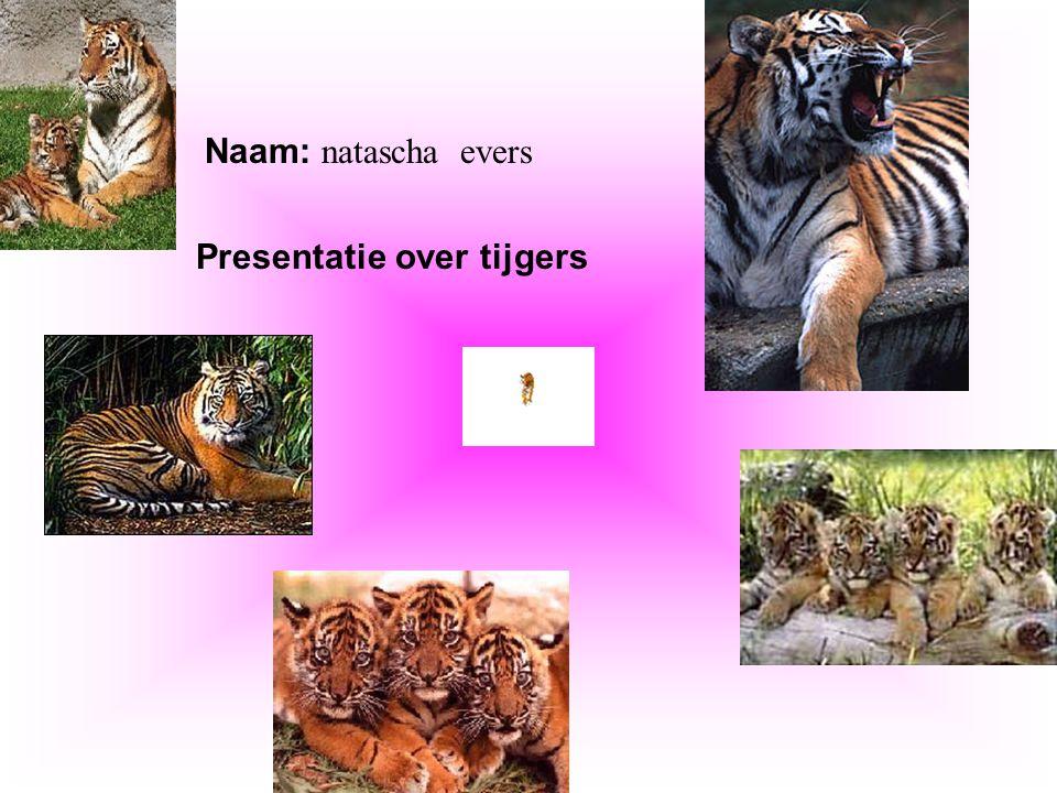 Presentatie over tijgers