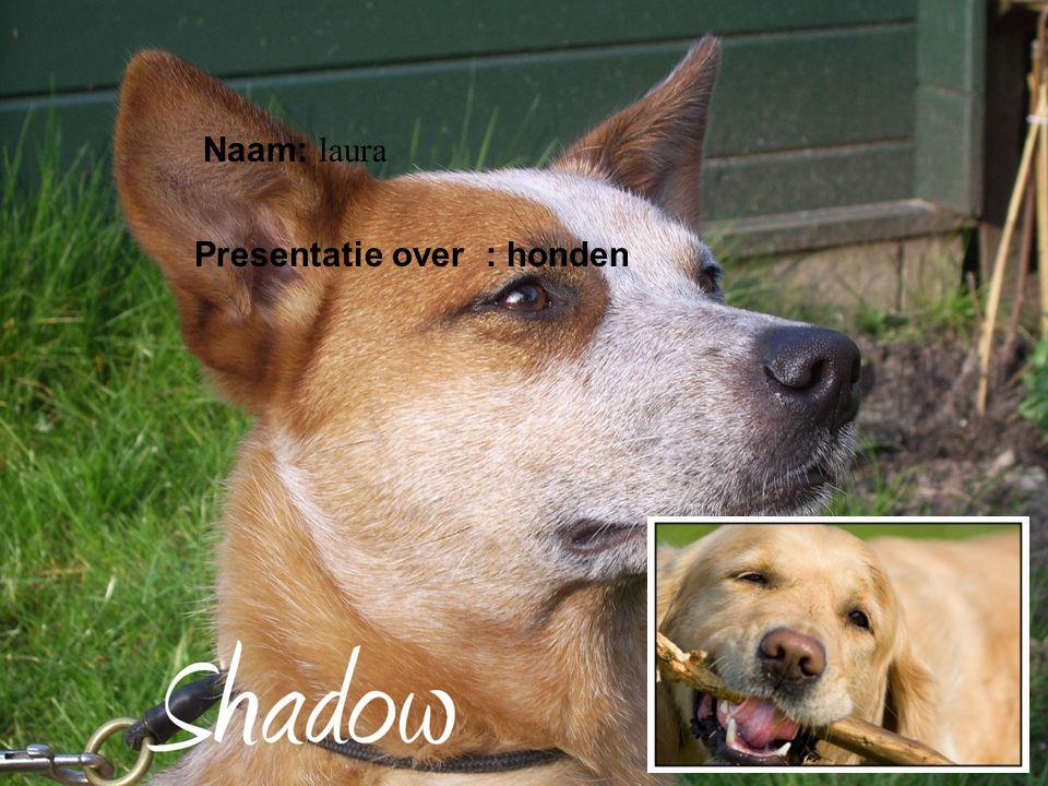 Presentatie over : honden