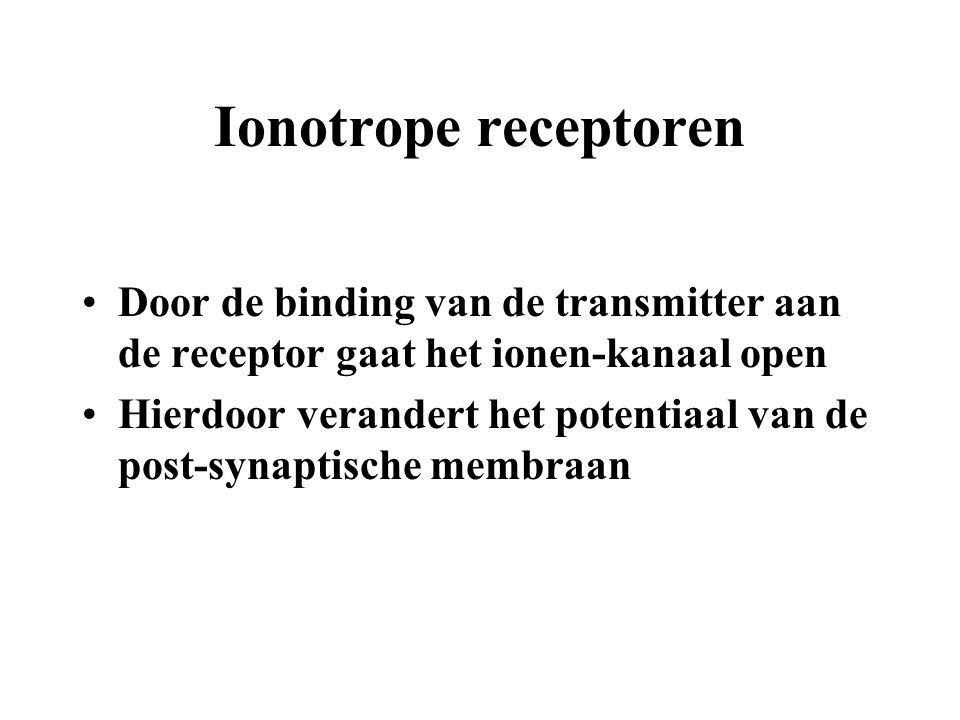 Ionotrope receptoren Door de binding van de transmitter aan de receptor gaat het ionen-kanaal open.