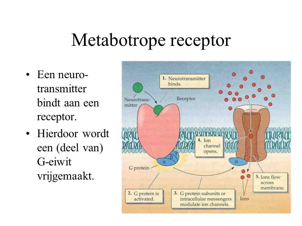 Metabotrope receptor Een neuro-transmitter bindt aan een receptor.