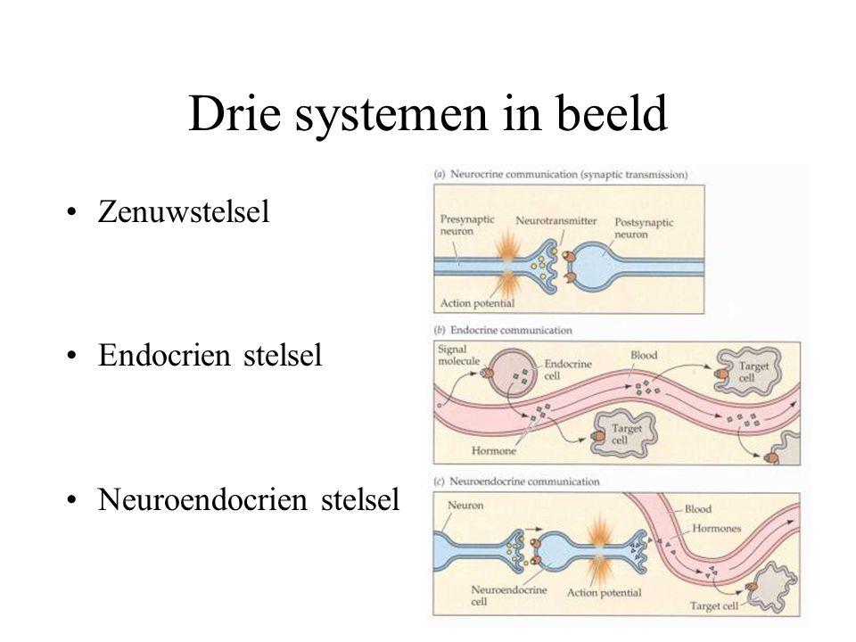 Drie systemen in beeld Zenuwstelsel Endocrien stelsel