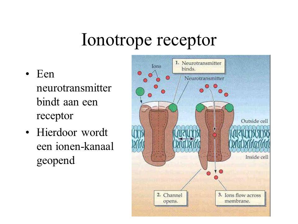 Ionotrope receptor Een neurotransmitter bindt aan een receptor