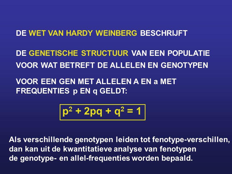 p2 + 2pq + q2 = 1 DE WET VAN HARDY WEINBERG BESCHRIJFT