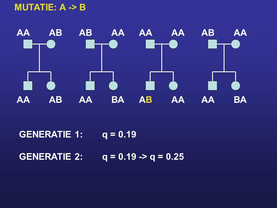 MUTATIE: A -> B AA. AB. AB. AA. AA. AA. AB. AA. AA. AB. AA. BA. AB. AA. AA. BA. GENERATIE 1: q = 0.19.