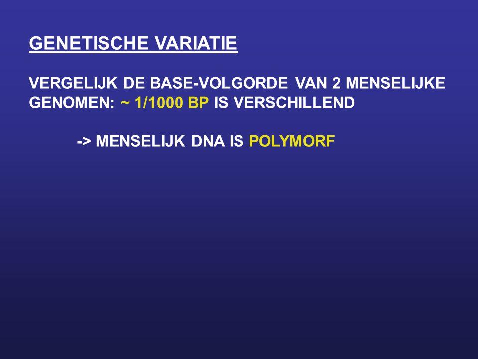 GENETISCHE VARIATIE VERGELIJK DE BASE-VOLGORDE VAN 2 MENSELIJKE
