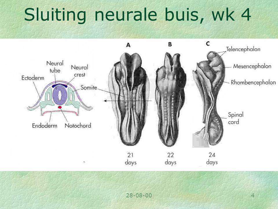 Sluiting neurale buis, wk 4