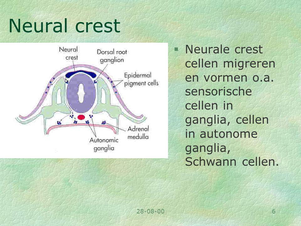 Neural crest Neurale crest cellen migreren en vormen o.a. sensorische cellen in ganglia, cellen in autonome ganglia, Schwann cellen.