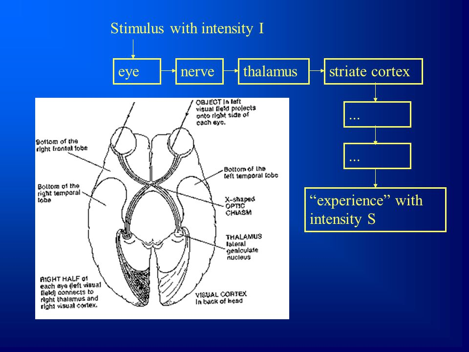 Stimulus with intensity I