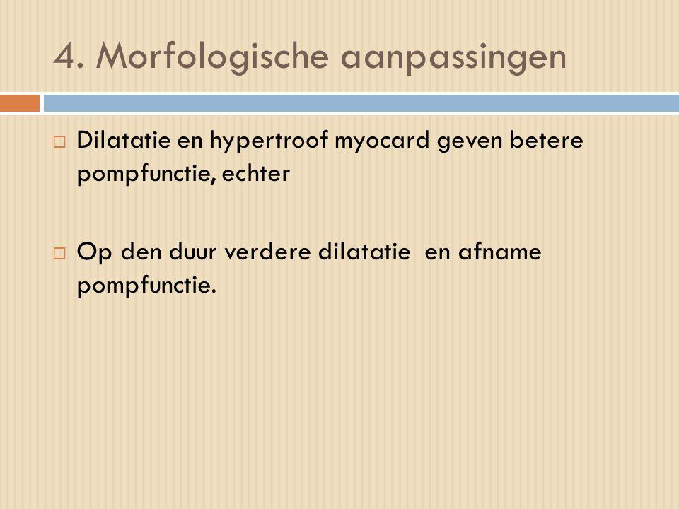 4. Morfologische aanpassingen