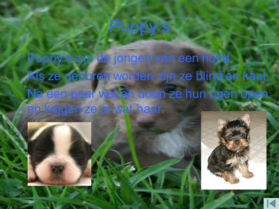 Puppy's Puppy's zijn de jongen van een hond.