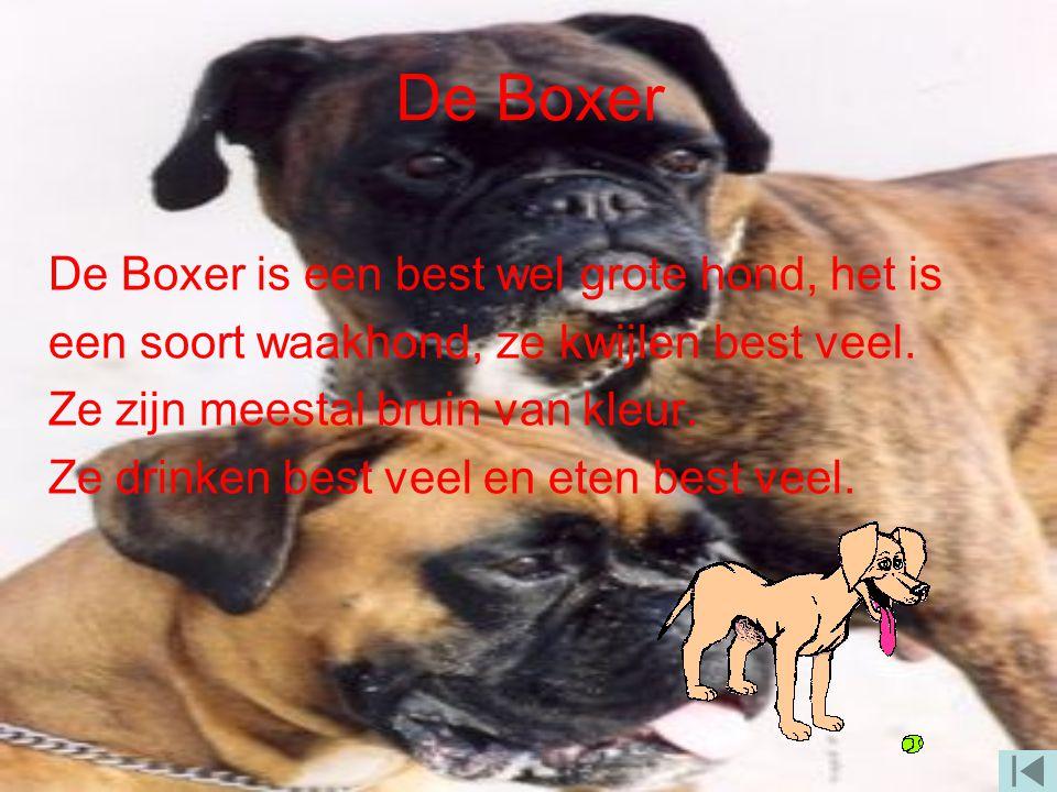 De Boxer De Boxer is een best wel grote hond, het is