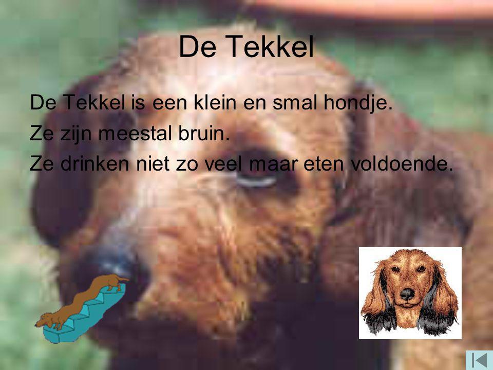 De Tekkel De Tekkel is een klein en smal hondje.