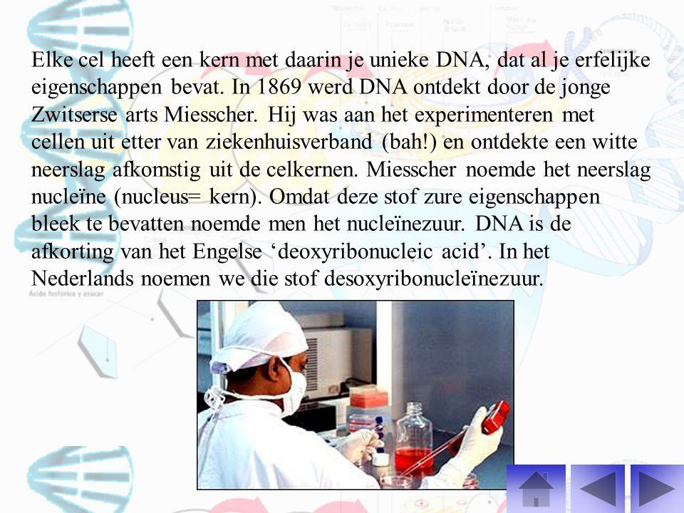 Elke cel heeft een kern met daarin je unieke DNA, dat al je erfelijke eigenschappen bevat.