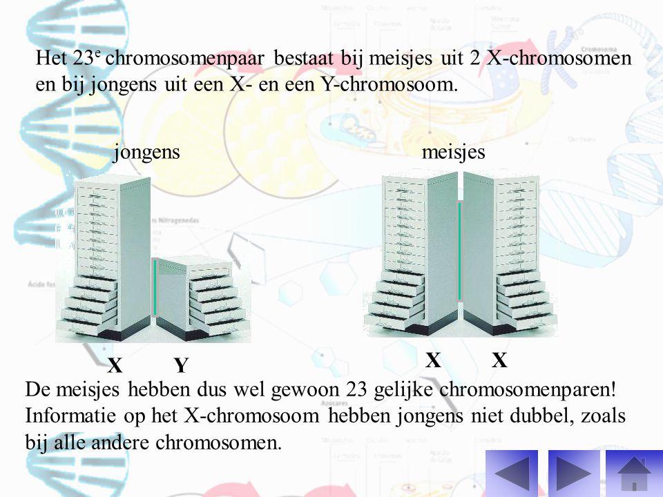 Het 23e chromosomenpaar bestaat bij meisjes uit 2 X-chromosomen en bij jongens uit een X- en een Y-chromosoom.
