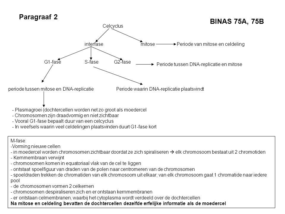 Paragraaf 2 BINAS 75A, 75B Celcyclus interfase mitose