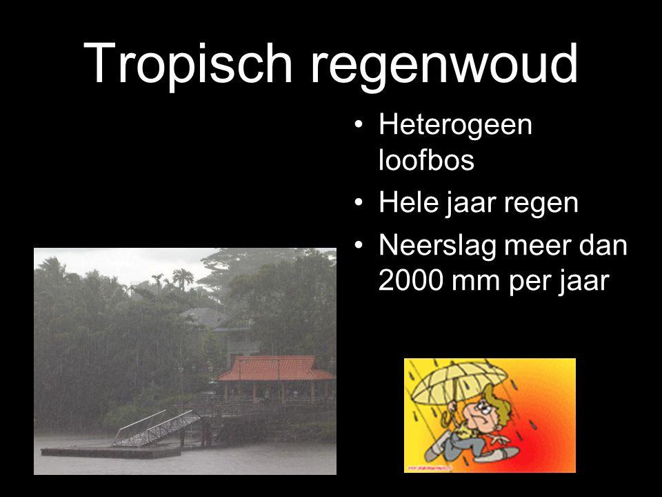 Tropisch regenwoud Heterogeen loofbos Hele jaar regen