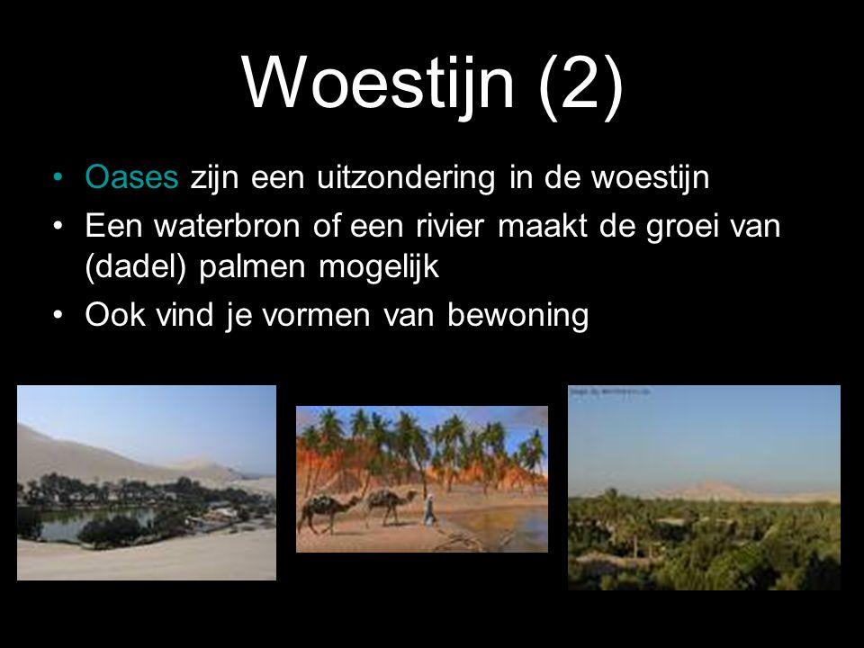 Woestijn (2) Oases zijn een uitzondering in de woestijn