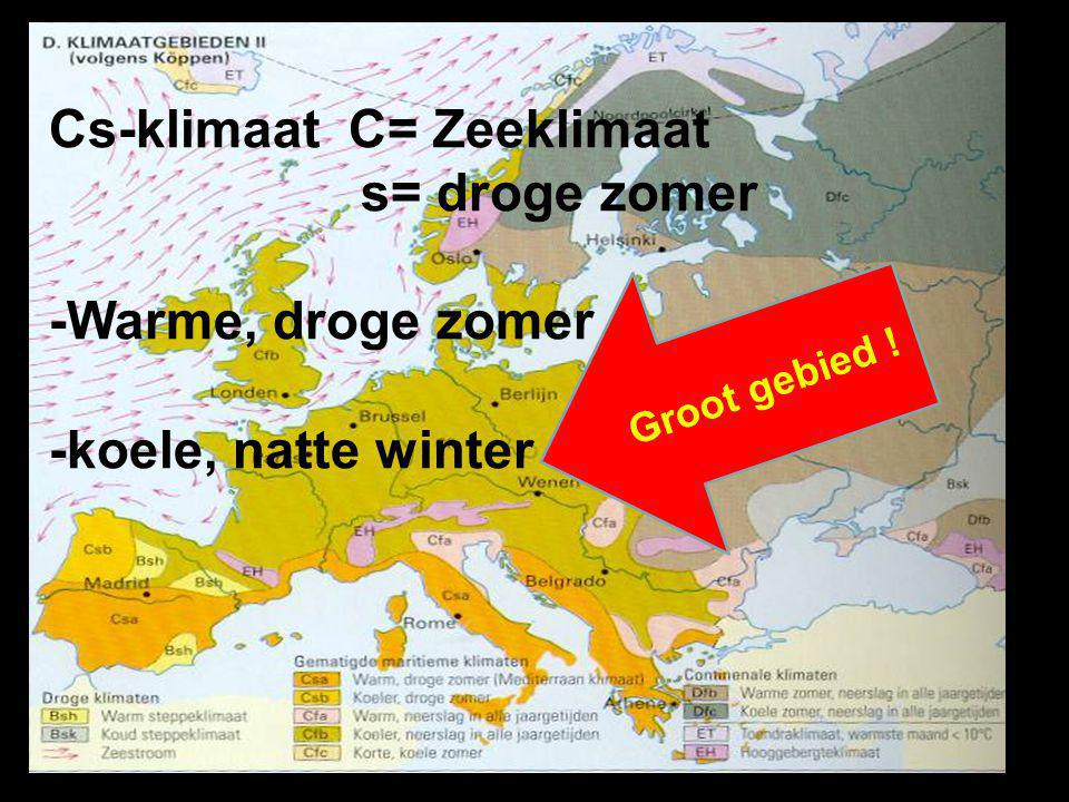 Cs-klimaat C= Zeeklimaat s= droge zomer -Warme, droge zomer
