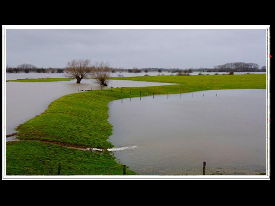 Zomerdijken Zomerdijken Winterdijken / Bandijken Winterdijken / Bandijken