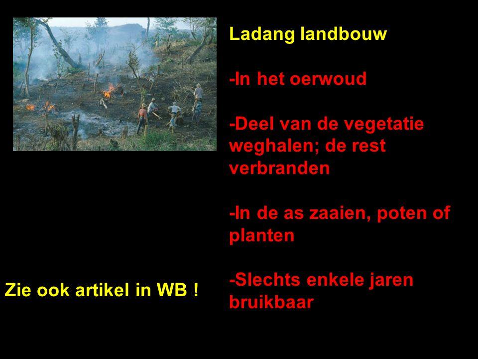 Ladang landbouw -In het oerwoud. -Deel van de vegetatie weghalen; de rest verbranden. -In de as zaaien, poten of planten.