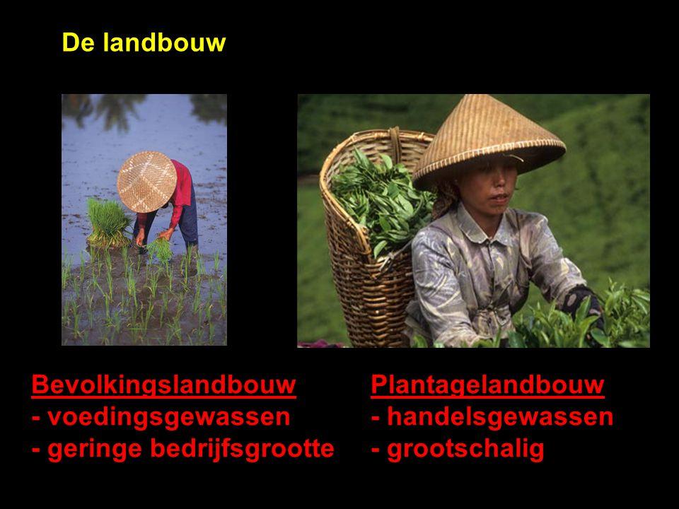De landbouw Bevolkingslandbouw Plantagelandbouw. - voedingsgewassen - handelsgewassen.