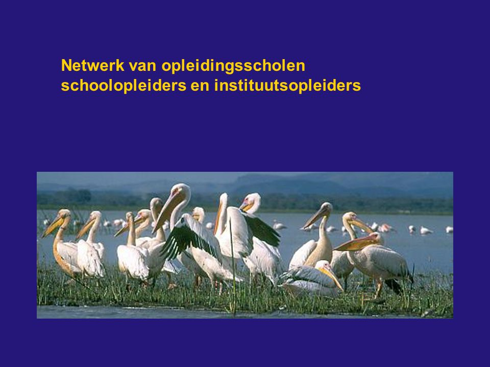 Netwerk van opleidingsscholen