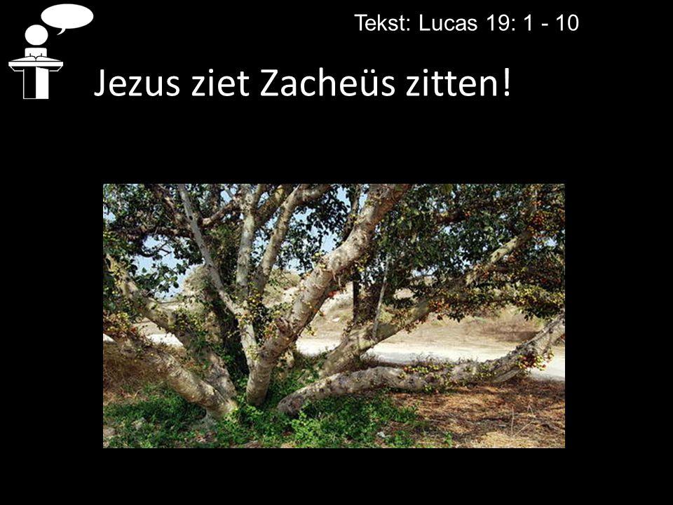 Jezus ziet Zacheüs zitten!