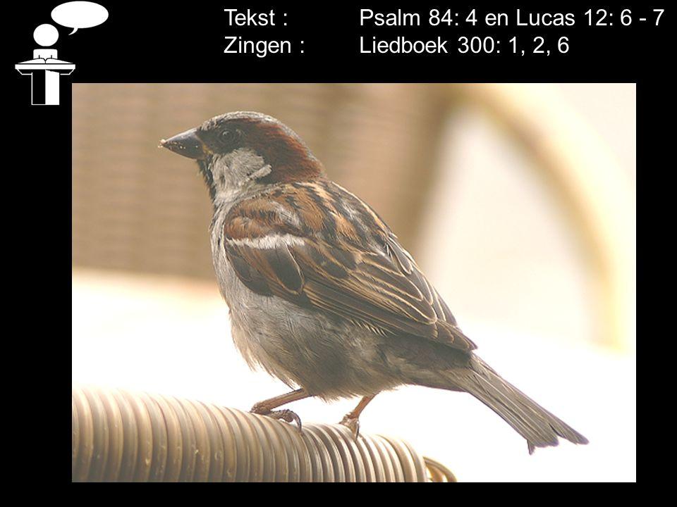 Tekst : Psalm 84: 4 en Lucas 12: 6 - 7