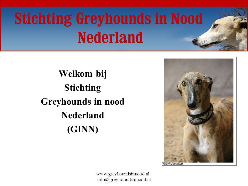 Welkom bij Stichting Greyhounds in nood Nederland (GINN)